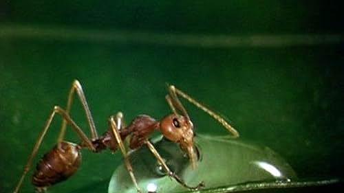 Trailer for Bugs! A Rainforest Adventure