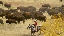 Namibia: Elephants of the Desert