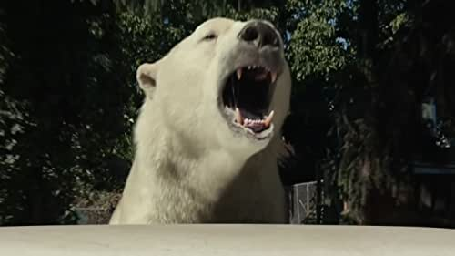 An 11-year old boy who believes that he is the best detective in town runs the agency Total Failures with his best friend, an imaginary 1,200 pound polar bear.