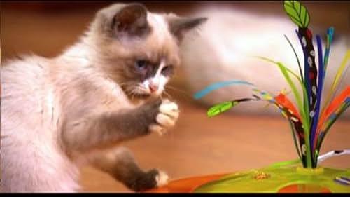 Trailer for Kitten Party
