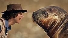 Andy e i leoni marini