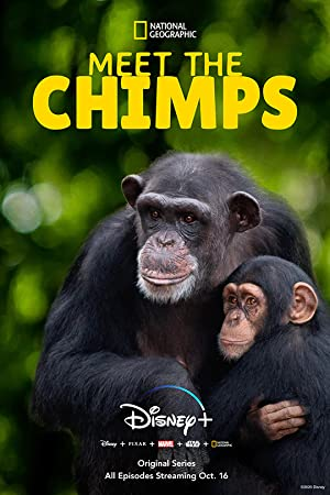 Where to stream Meet the Chimps