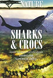 Supersize Crocs Poster