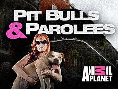 Colin samway pitbulls and parolees | pitbulls and parolees 2018