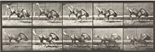 Gnu Bucking and Galloping (1887)