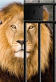 Zoo Revolution Poster