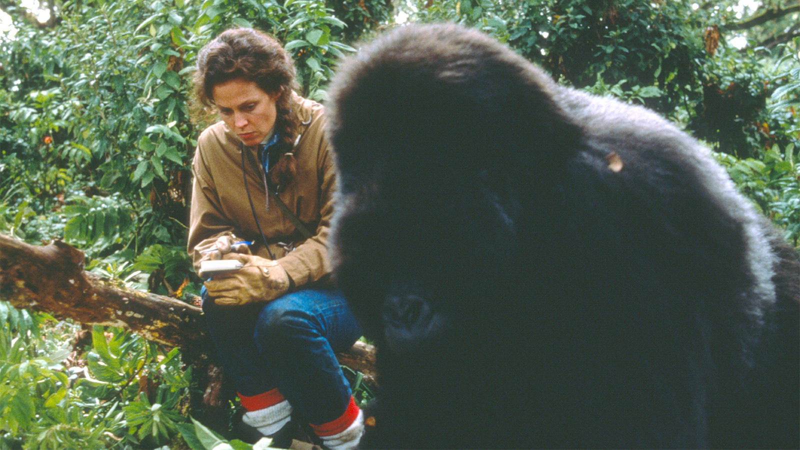 Sigourney Weaver and John Alexander in Gorillas in the Mist: The Story of Dian Fossey (1988)