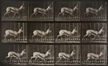 Antelope Trotting (1887)