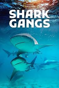 Haie - Vereint in der Jagd?