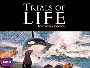 Where to stream The Trials of Life