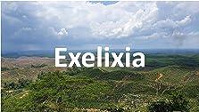 Exelixia (2023– )