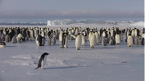 Penguins (2019) - IMDb