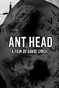 Primary photo for Ant Head