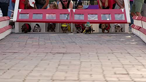 Wiener Dog International - Official Trailer