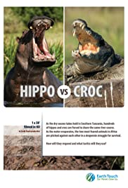 Hippo vs Croc Poster