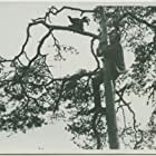 Judaspengar (1915)