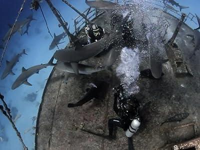 Watch new movie computer Sharkpocalypse [1680x1050]