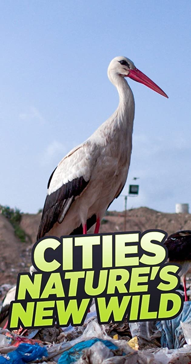Download Cities: Nature's New Wild or watch streaming online complete episodes of  Season1 in HD 720p 1080p using torrent