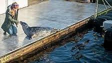 Tod im Robbenbecken