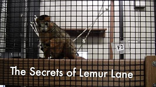 Watch free movie sites The Secrets of Lemur Lane [320p]