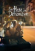 Ein Hase im Dezember