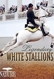 Legendary White Stallions Poster
