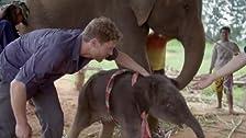 Nel regno degli elefanti