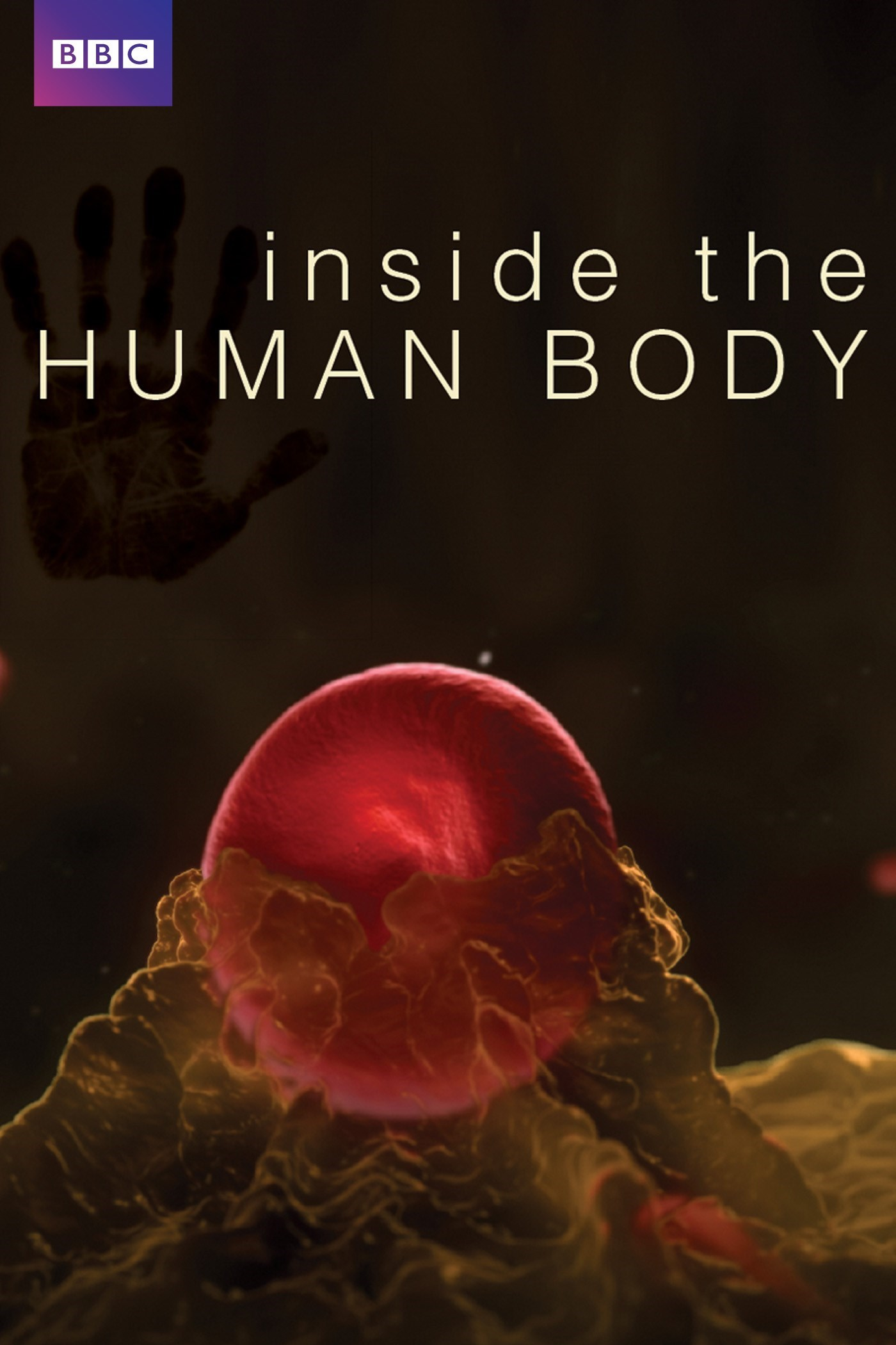 Inside The Human Body Tv Series 2011 Photo Gallery Imdb