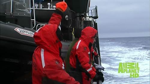 Whale Wars: Pete Bethune Prepares To Board The Shonan Maru 2