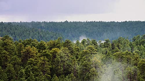 Fire and Water: Restoring Arizona's Forests Trailer