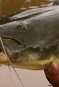 Primary photo for Killer Catfish