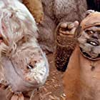 Warwick Davis in Ewoks: The Battle for Endor (1985)