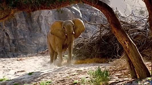 Welcome full movie hd download Desert Elephants of the Kaokoveld [1280x720]
