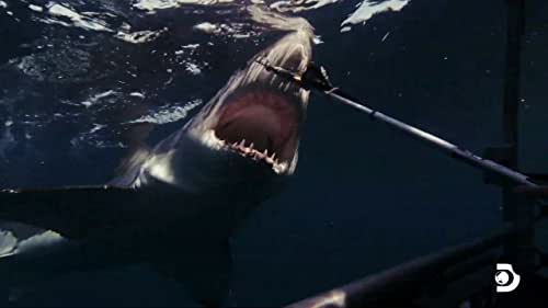 Shark Week: Sharks Of The Badlands
