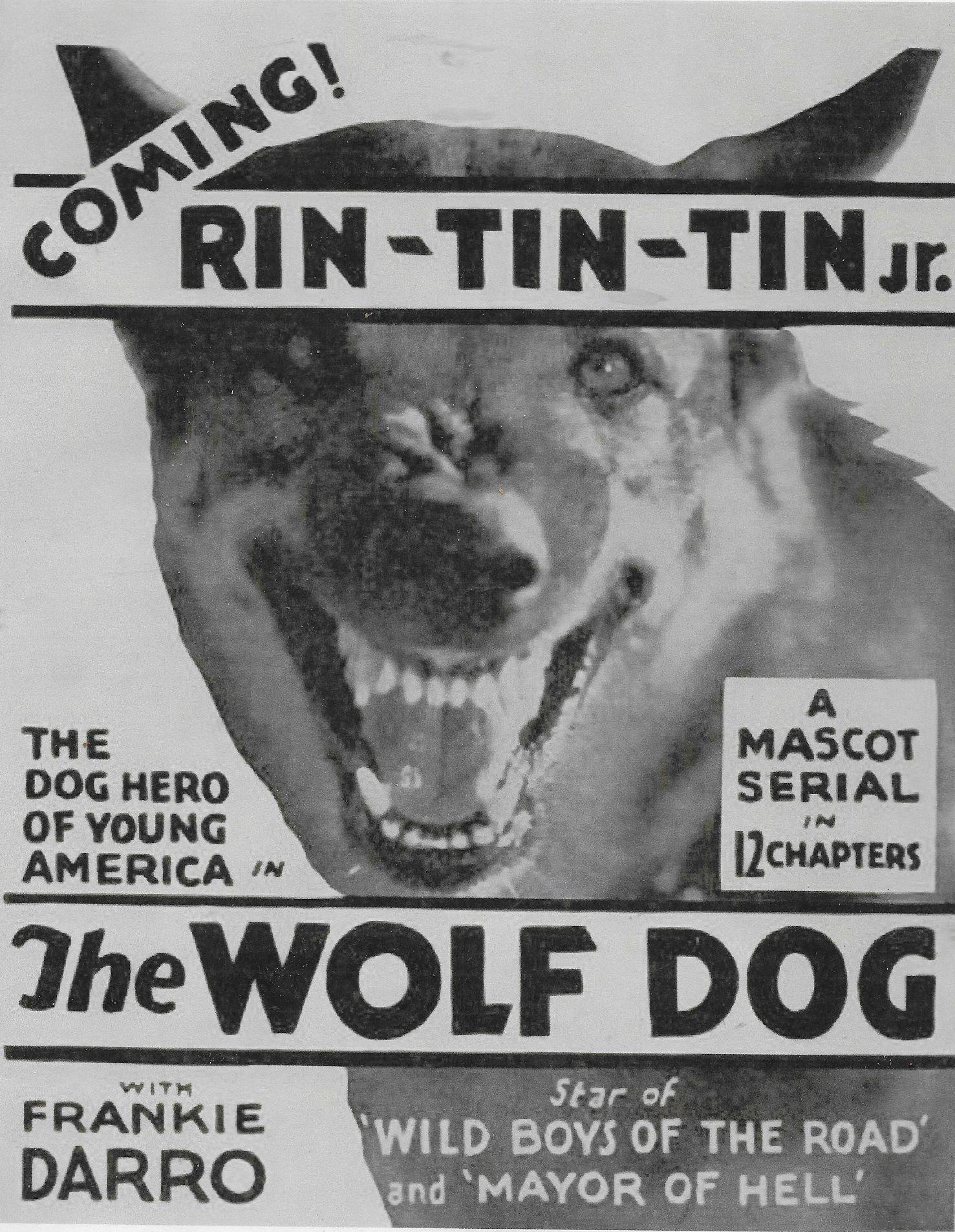 Rin Tin Tin Jr. in The Wolf Dog (1933)