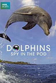 Primary photo for Dolphins: Spy in the Pod