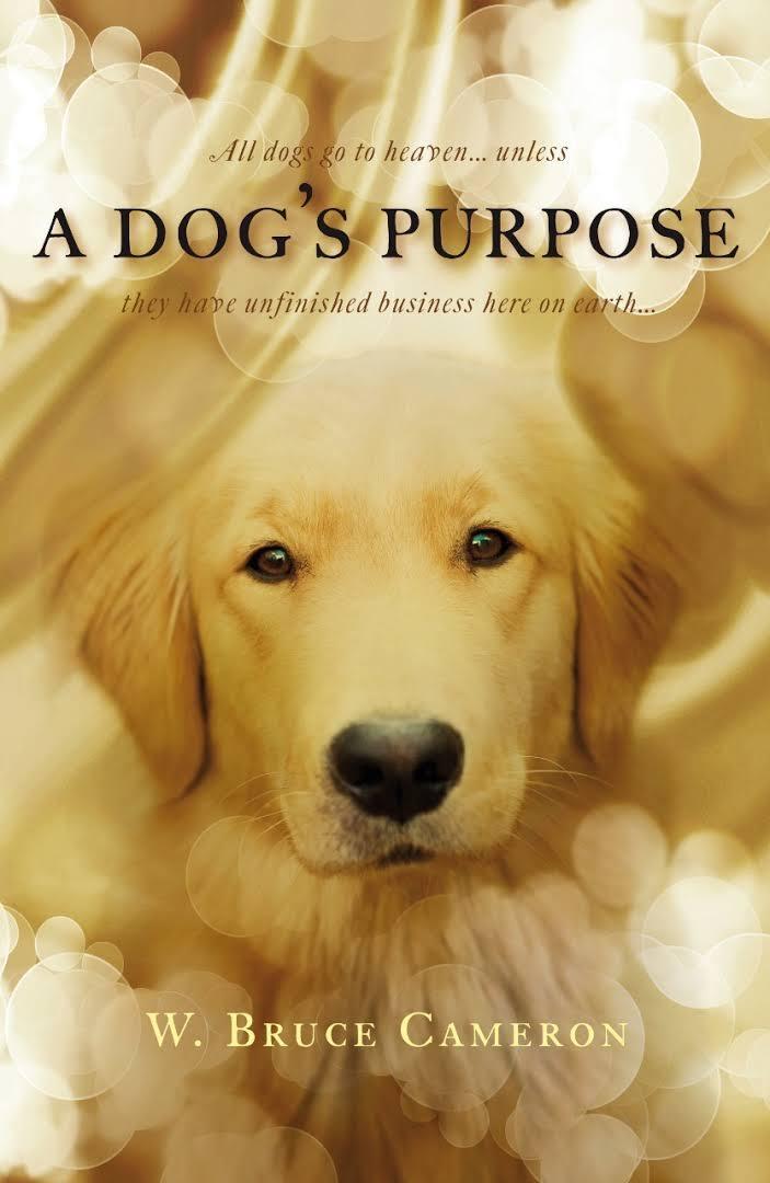 A Dog S Purpose 2017 Photo Gallery Imdb