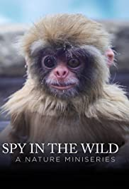 Spy in the Wild: A Nature Miniseries Poster