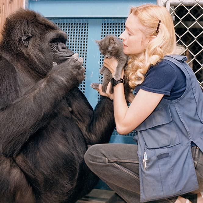 Koko and Penny Patterson in Koko: The Gorilla Who Talks to People (2016)