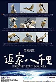 Bird Without Borders Poster