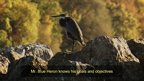 Official teaser clip by Moyano Lingua Consulting and Productions, LLC. A great blue heron must work his way down a pier to fish in the calmed, still waters of a lake. By contrast, seagulls and night herons are in the shadow more passive. A fantasy motivational piece showcasing wildlife.  Full episode available to stream on demand worldwide on https://xerb.tv/channel/rnv/video/5972