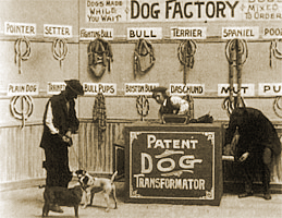 Image result for Dog Factory 1904