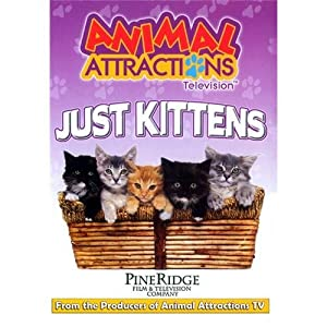 Movie downloads ipaq Just Kittens by none [mp4]