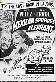 Primary photo for Mexican Spitfire's Elephant