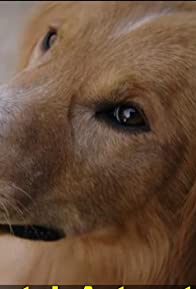 Primary photo for A Dog's Purpose: A Writer's Purpose