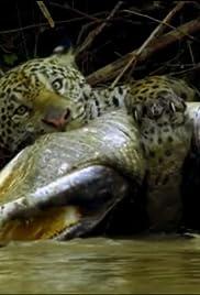 Jungles Poster