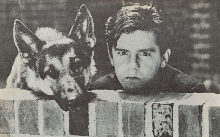 Frankie Darro and Rin Tin Tin Jr. in The Wolf Dog (1933)