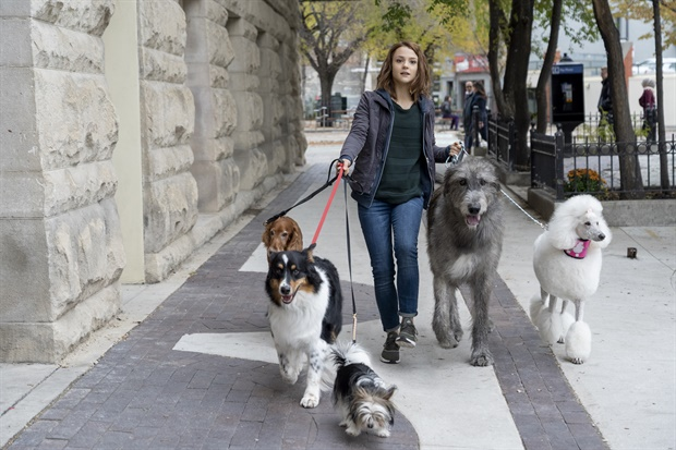 A Dog's Journey (2019) Online Subtitrat in Romana
