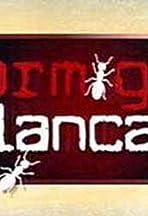 Hormigas blancas