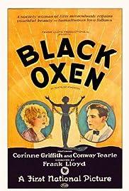 Black Oxen Poster